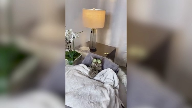 Sassy Cat With Millions of Followers on Tik Tok Likes to Enjoy Relaxing Spa Days