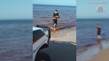 Heartwarming Video Shows Australian Police Officers Rescuing Helpless Wallaby from Water!