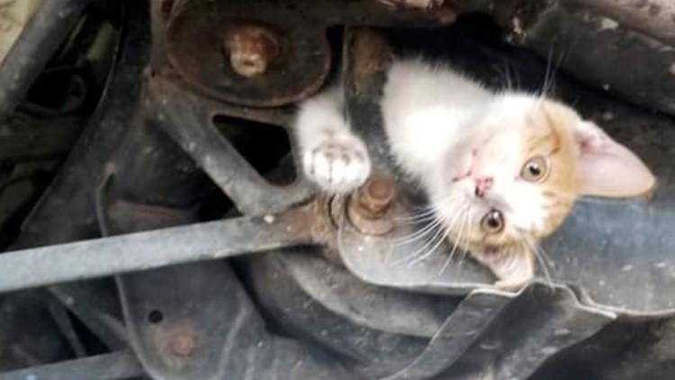 Kitten Rescue Kentucky Midas