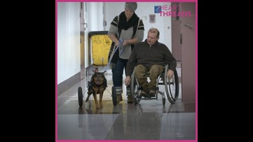 Dog in wheelchair adopted by man also in wheelchair