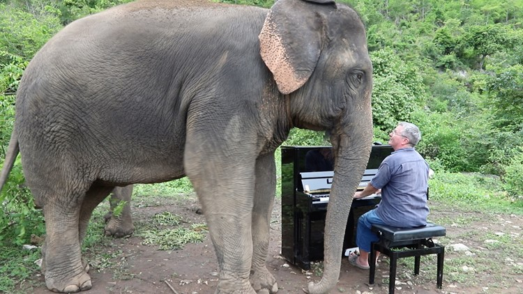 Watch what happens when this concert pianist plays for abused elephants