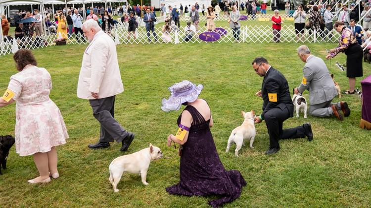Big-winning whippet, Pekingese face off at Westminster dog show