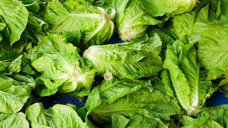 Romaine Lettuce Generic