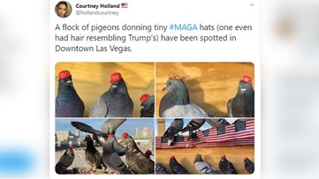 Pigeons with glued-on MAGA hats released in Las Vegas