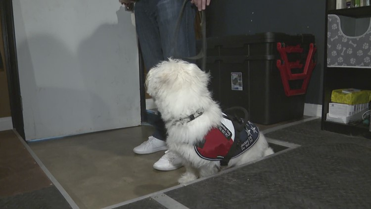 Dog Tags: Buddy takes step forward in service dog training