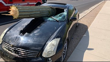Tucson driver goes head-to-head with cactus, cactus wins