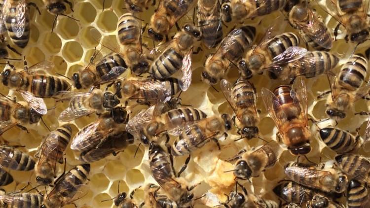 Michigan truck hauling 50 million bees crashes, unleashing swarm