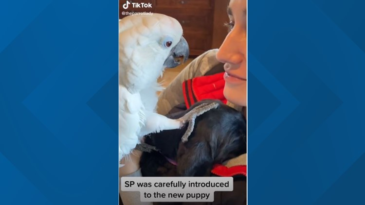Parrot goes viral on TikTok after meeting puppy, telling him 'I love you'