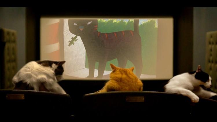 Quarantine Cat Film Fest