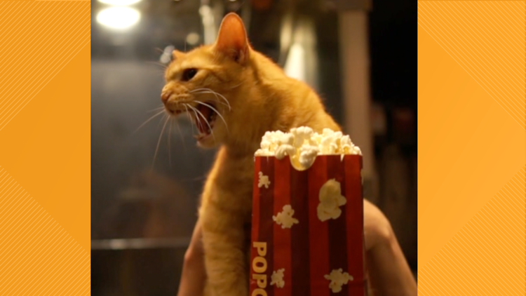 Quarantine Cat Film Fest cat with popcorn