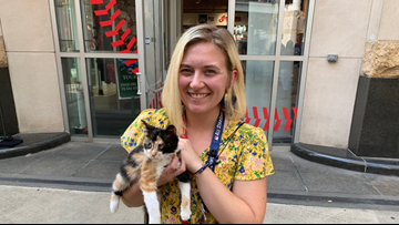 Cat found during Indians game adopted by team staff member