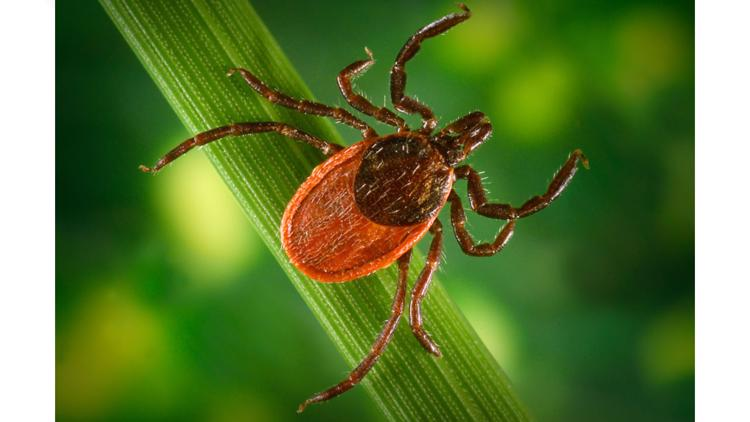 2021 slated to be a bad year for ticks in Ohio