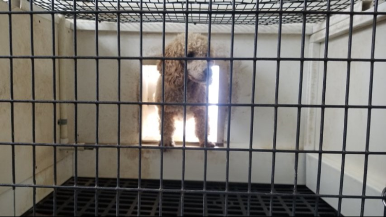 16 Ohio puppy mills listed on Humane Society's 'Horrible Hundred' list