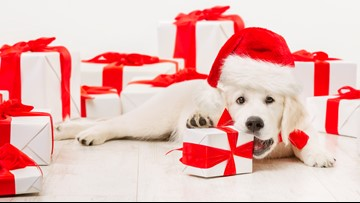 Gifting a pet? Watch out for puppy scams this holiday season