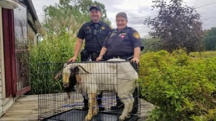 Goat breaks into Ashland County home