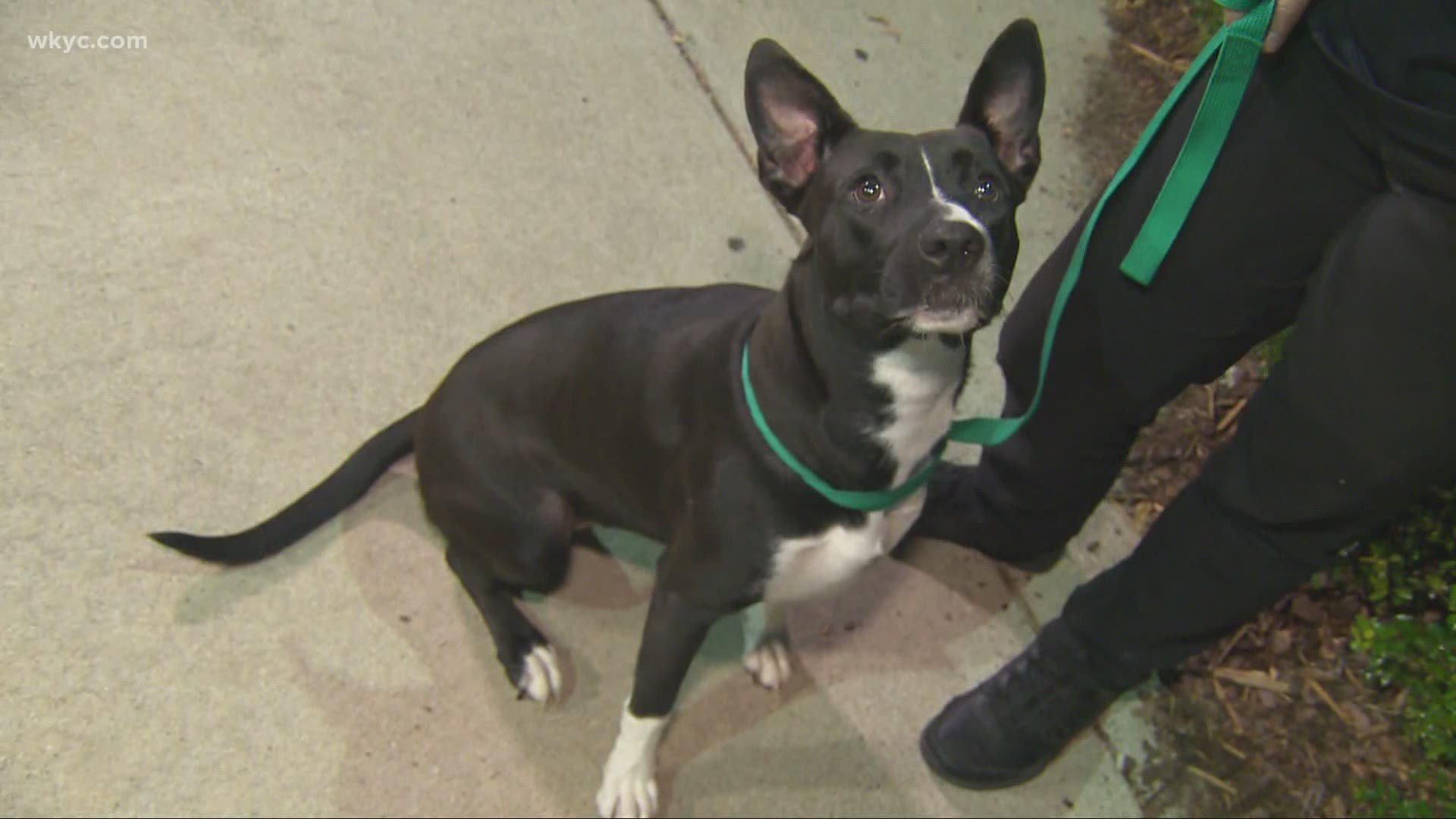Clear The Shelters Pet Adoption Changes For 2020 Event Wtol Com