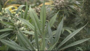 City of Cleveland proposes 'no fine, no time' ordinance for low-level marijuana crimes