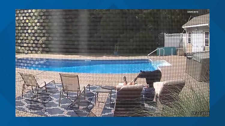 WATCH: Bear walks up to man presumably asleep at backyard pool