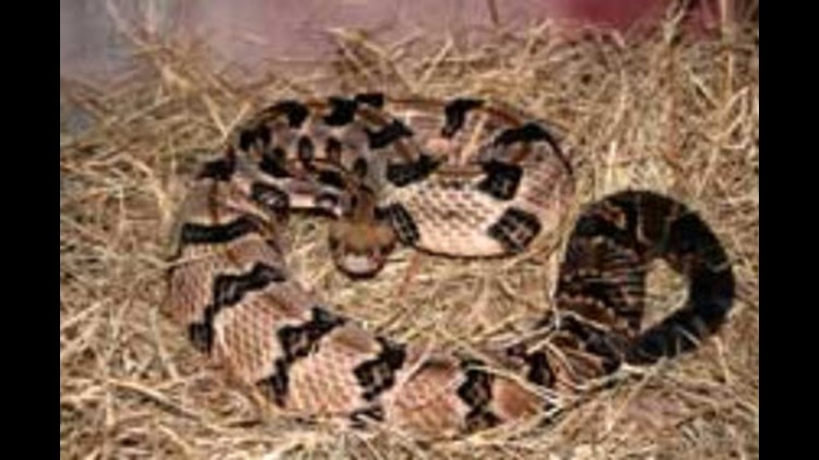 A guide to Ohio's snakes   wtol com