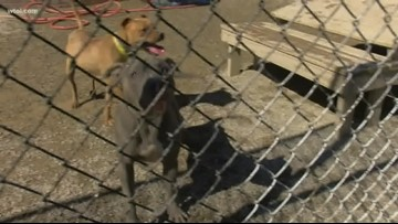 Lucas County Canine Care and Control is overflowing with dogs right now