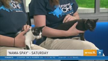 Do some kitty yoga with 'Nama-spay' at Humane Ohio