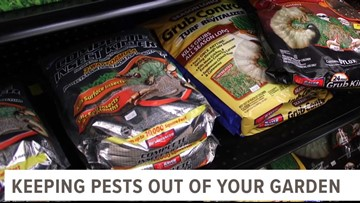 Go 419: Quick tips to keep pests out of your garden