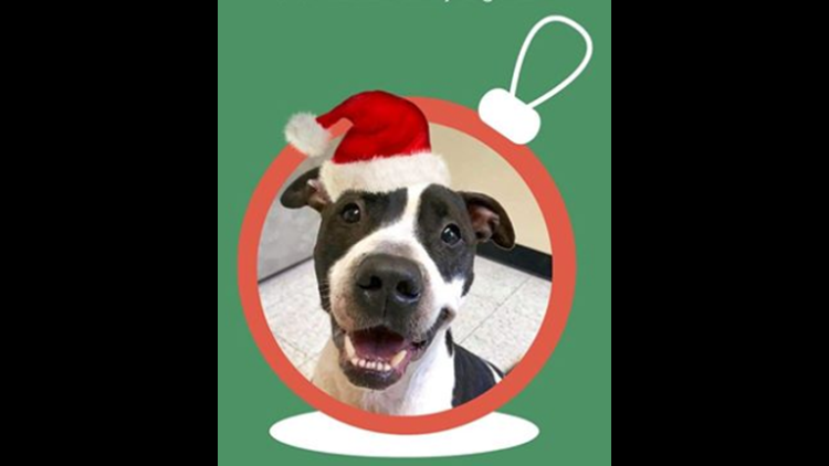 Are There Any Pet Adoption Specials For The Holidays Wtol Com