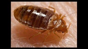 Toledo ranks among top 50 cities for bed bugs