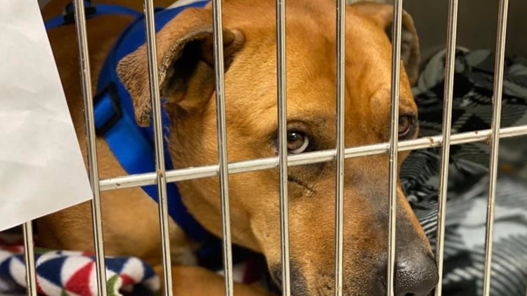 Animal cruelty cases increasing with warmer weather