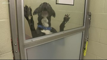 Local animal advocates react to cruelty now becoming a federal offense