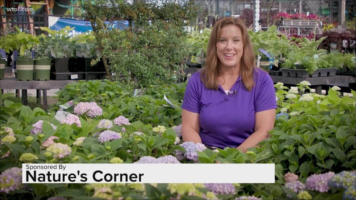 Go 419 Nature's Corner   How to prune your overgrowing plants