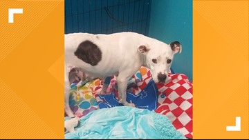 TAHS asking for donations to assist case of female dog that was abandoned while giving birth