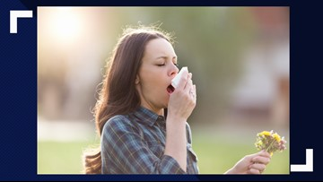 Toledo currently leads Midwest in allergy suffering