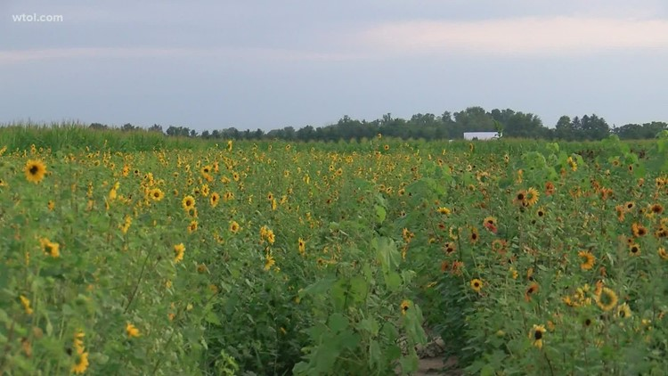 Gust Brothers Flower and Produce Farm is open for the season