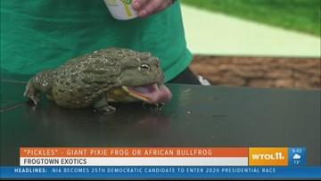 Frogtown Exotics