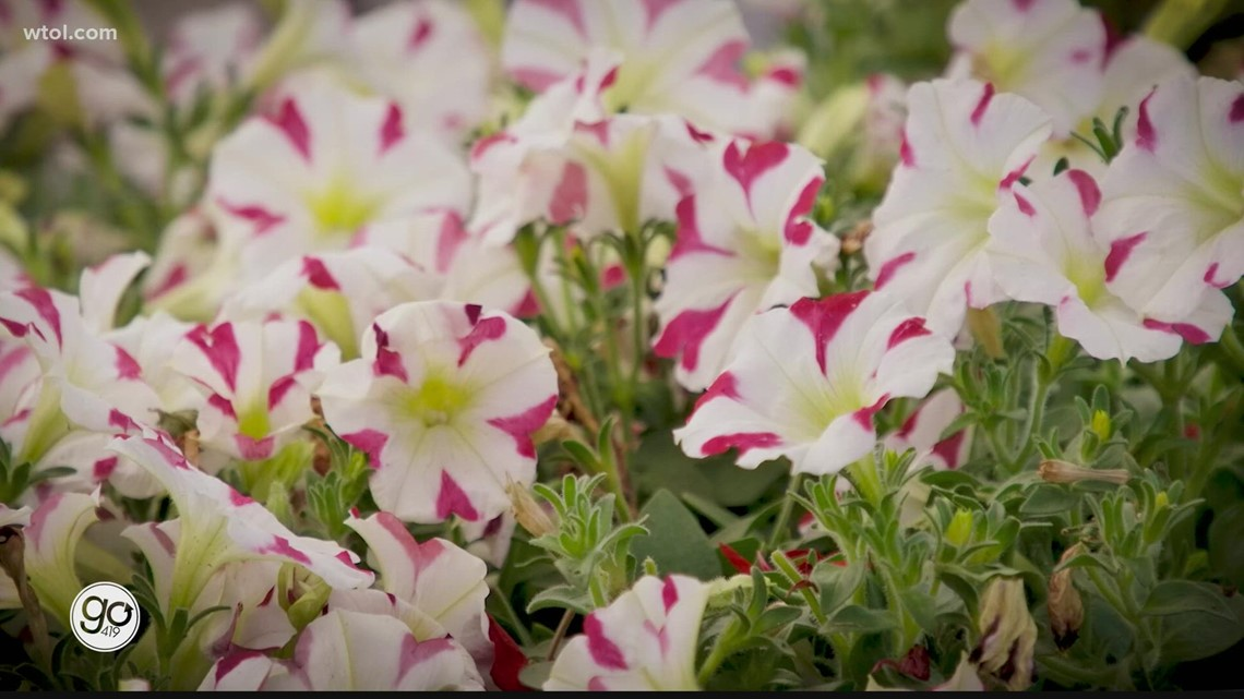 Go 419 Nature's Corner: Jenny Amstuts from Nature's Corner gives you some tips on maintaining annuals