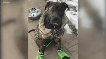 Lucas County Pit Crew celebrates rare animal cruelty indictment against Bogey's owner