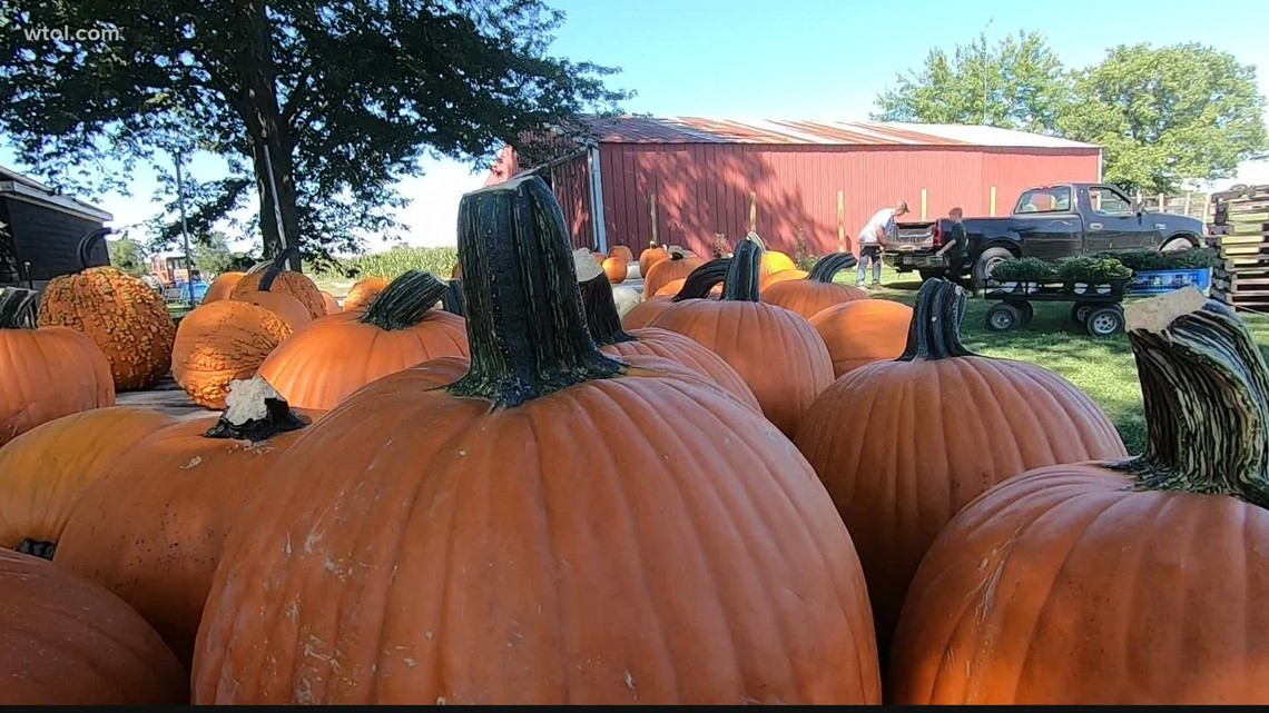 Get your fall fix at Fleitz Pumpkin Farm