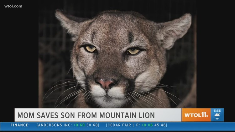Mom in California saves 5-year-old son from mountain lion
