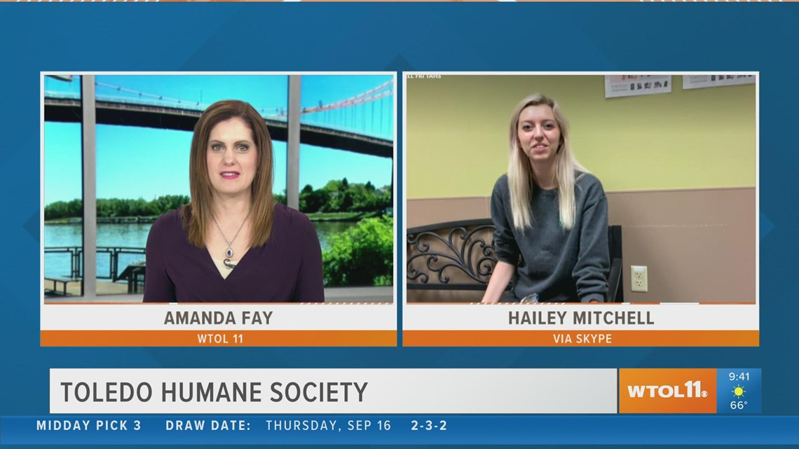 Foster or adopt a furry friend this fall from the Toledo Humane Society