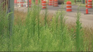 Call 11 for Action: Overgrown grass on Sylvania Avenue causing concerns for pedestrians