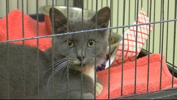 Toledo Area Humane Society receives influx of animals due to Hurricane Dorian