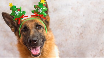Study: 40% of Ohio pet owners admit spending more on pets than their partners during the holidays