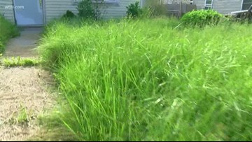 Call 11 for Action: City promises maintenance after neighbors complain of unkempt yard