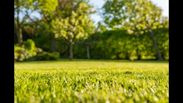 Stretching Your Dollar: Save money and time on lawn care