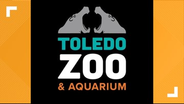 Toledo Zoo offering virtual classrooms to keep kids learning from home