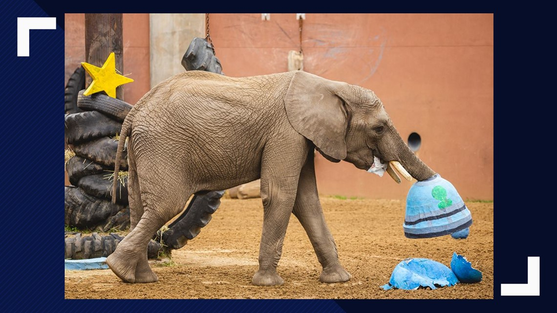 Toledo Zoo to hold birthday party for youngest African elephant