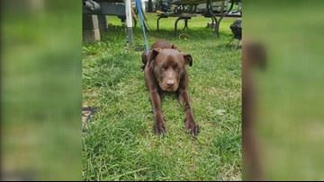 Stryker woman pleading for dog's return