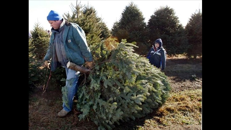 Whitehouse Christmas.Whitehouse Christmas Tree Farm Asking For Help After