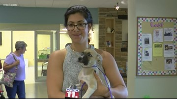 Toledo Area Humane Society filled with cats from Hurricane Dorian's expected targets